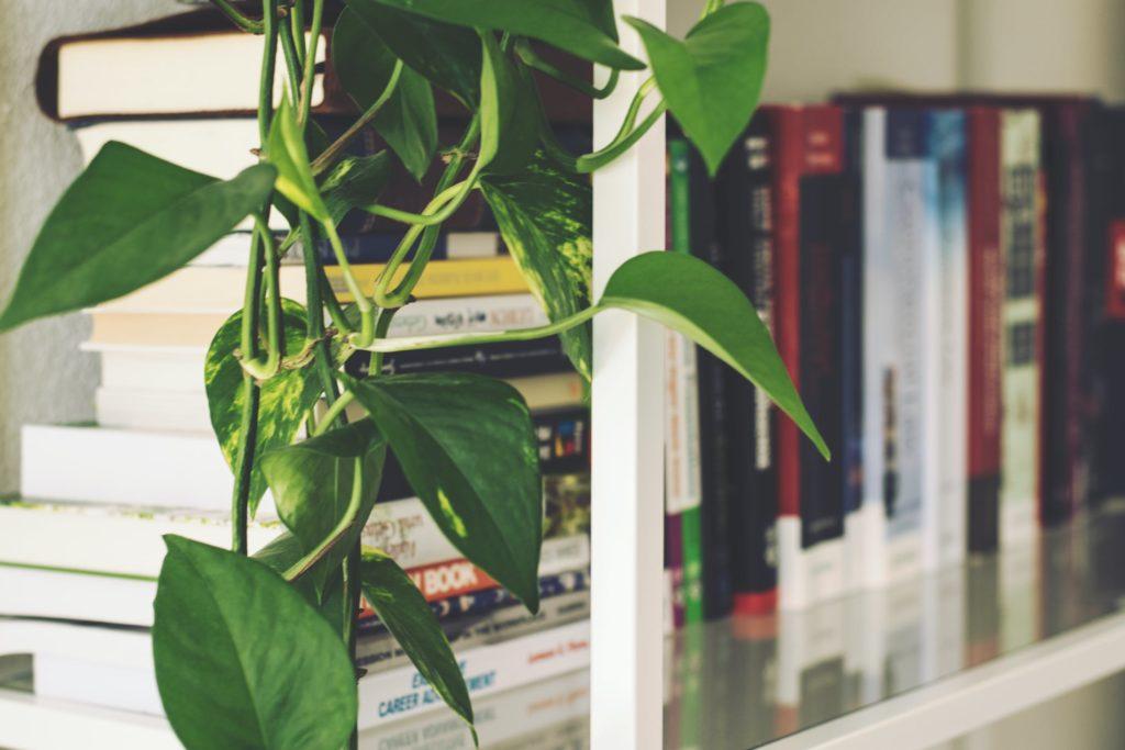 plant near humble texas